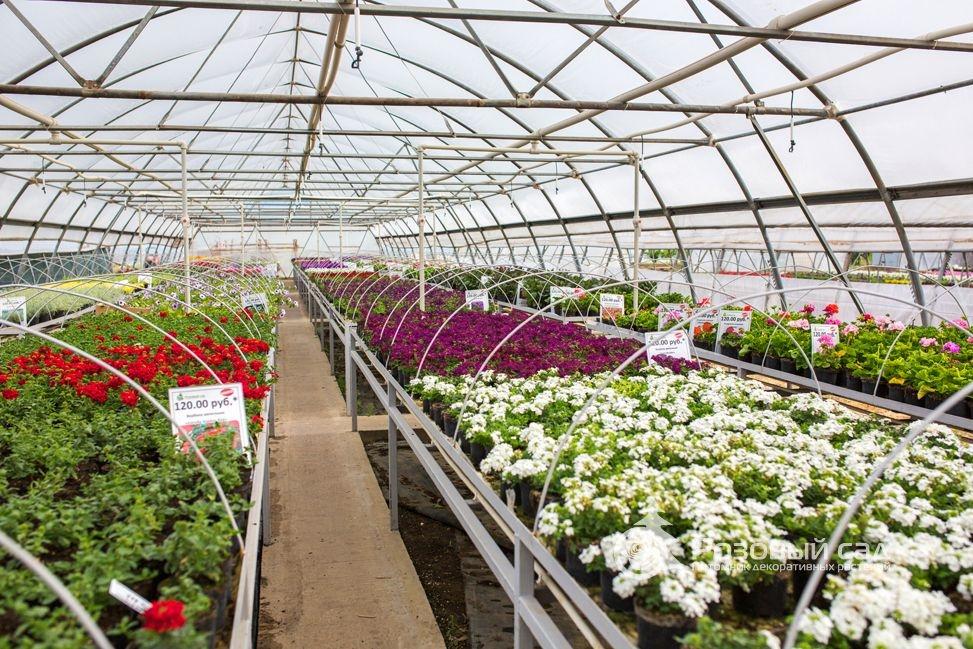 Питомники рассады и растений 727