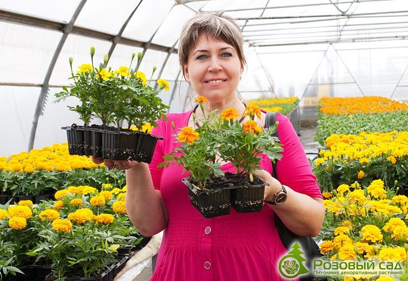 В чём выращивать рассаду цветов 773