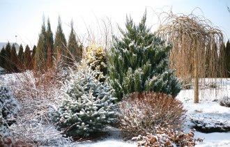Красивый сад зимой? Легко!