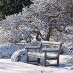 План работы в саду зимой