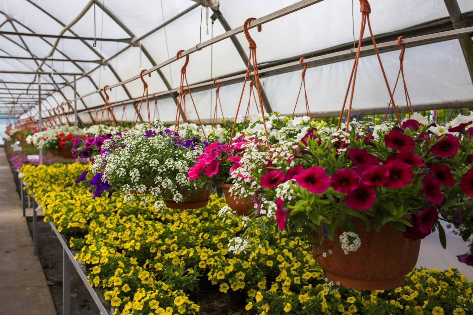 Саженцы цветов купить спб, жизни