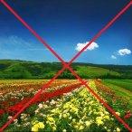 ВНИМАНИЕ!!! ОТМЕНА фестиваля цветущей розы!!!