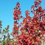 Осенний сезон - фотографии нашего питомника осенью