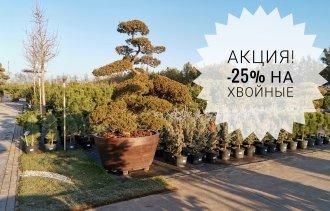 Внимание! Акция на «новогодний» ассортимент растений!