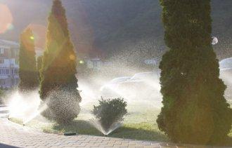 Важность полива декоративных растений