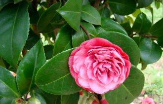 Теплолюбивые растения, которые могут быть в Вашем саду