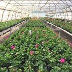 Началась продажа однолетних растений!