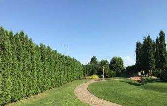 Живая изгородь – признак утонченного вкуса и эстетики в ландшафтном  дизайне.