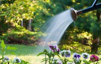 Напоминаем Вам о важности полива в жаркие месяцы!