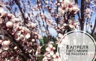 ВНИМАНИЕ! 8 апреля питомник не работает!