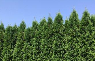Знаете ли вы, какое самое популярное растение в нашем питомнике?