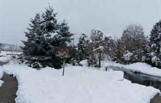 Снег на растениях. Нужно ли его убирать?