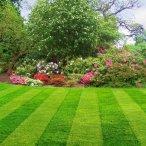 Рулонный газон от Розового Сада