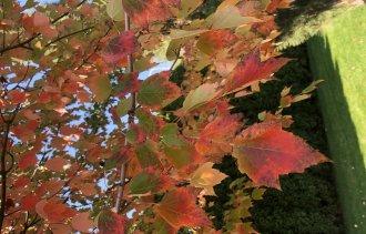Топ 𝟏𝟎 самых красивых растений осенью