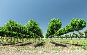 Внимание! Рады сообщить Вам, что выкопка лиственных деревьев из грунта началась!