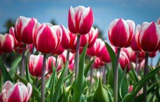 Милые дамы! Поздравляем вас с 8 марта!