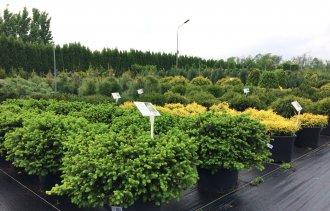 Можно ли высаживать растения в весенне-летний период?