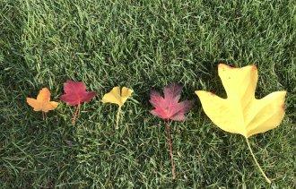 Выбери, какого цвета будет твоя осень!
